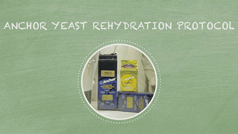 Rehydration Protocol for Anchor Yeast